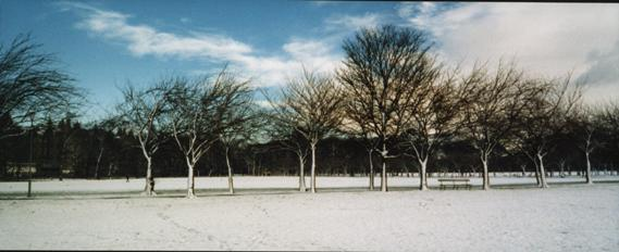 meadows in snow